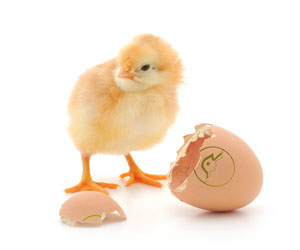 T Series Commercial Egg incubators
